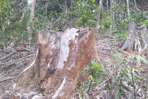 Gia Lai: Chở gỗ trái phép, người đàn ông bị gỗ đè tử vong