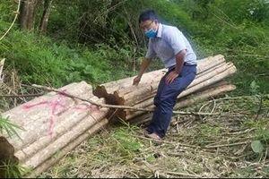 Chở gỗ lậu, 1 người bị gỗ đè tử vong