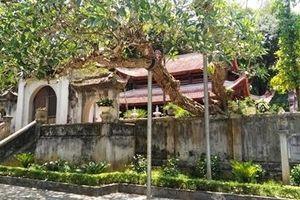 Về Lam Sơn tìm hào khí Lũng Nhai: Cuộc khởi nghĩa vĩ đại