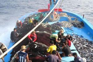 Bình Định: Hơn 1.500 tàu cá với gần 13.000 ngư dân đang hoạt động xa bờ