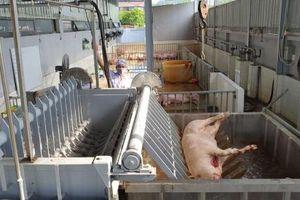 Hải Phòng siết chặt quản lý giết mổ và tiêu thụ sản phẩm thịt lợn