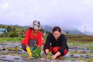 Phát huy hiệu quả sau đào tạo nghề cho lao động nông thôn ở Sìn Hồ