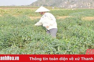 Phát huy vai trò nông dân trong công tác tuyên truyền, trợ giúp pháp lý