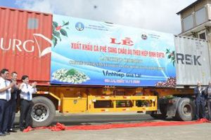 Gần 300 tấn cà phê Việt lên đường sang châu Âu, hưởng thuế 0%