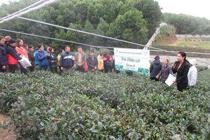 Khuyên nông Thái Nguyên góp sức xây dựng nông thôn mới