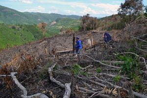 Thủ tướng yêu cầu kiểm tra thông tin việc phá rừng ở Phú Yên