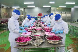 Lô trái cây đầu tiên đi Châu Âu theo Hiệp định EVFTA