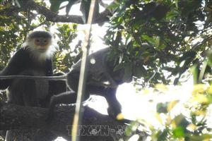 Gây nuôi và quản lý động vật hoang dã - Bài 1: Thực trạng nuôi thương mại và nuôi bảo tồn