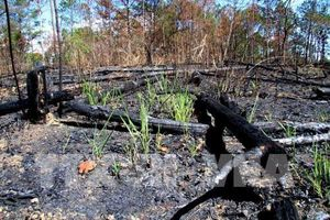Xử phạt 6 đối tượng phá rừng với số tiền gần 500 triệu đồng