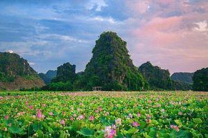Ninh Bình: Đậm tình lại thơm Sen
