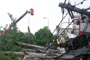 Bão chưa đổ bộ nhưng cây đã bật gốc, mất điện, tắc đường
