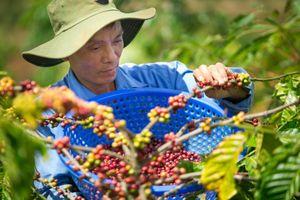 EVFTA tạo lực đẩy tăng xuất khẩu hàng hóa
