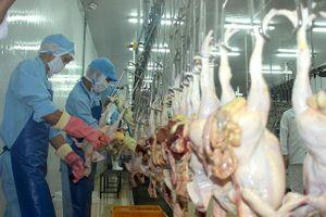Soi 'điểm nghẽn' xuất khẩu của ngành chăn nuôi