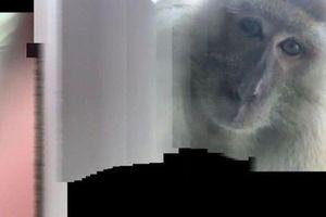 Người đàn ông bị mất điện thoại, lúc tìm lại thấy toàn ảnh 'tự sướng' của khỉ