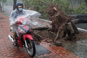Thêm 3 người chết do bão số 5