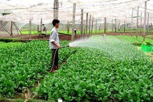 Huyện Đông Anh: Giá trị sản xuất nông nghiệp đạt 267 triệu đồng/ha