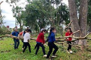 Dọn dẹp cây xanh gãy đổ 'giải cứu' đường phố Huế sau bão số 5
