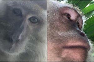 Khỉ ngộ nghĩnh chụp selfie đầy máy, chủ nhân xem ảnh không thể nhịn cười