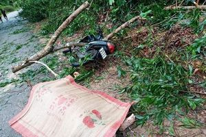 TT-Huế có thêm 2 trường hợp tử vong do bão số 5, gần 100 trường hợp bị thương