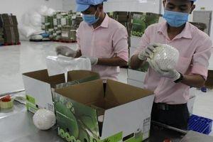 Quản lý chặt chẽ 'giấy thông hành' để trái cây tươi vào các thị trường khó tính