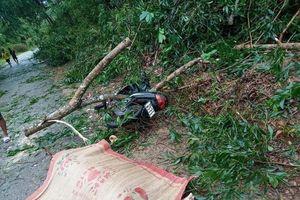 Huế: Chuyên viên phòng GD&ĐT tử vong do bị cành cây gãy đè trúng