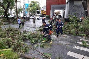 Một cán bộ phòng Giáo dục và Đào tạo tử vong do cành cây gãy đè trúng ở Huế