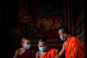 Tây Ninh: Sen Dolta mùa dịch