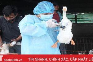 Hà Tĩnh thực hiện các biện pháp cấp bách phòng, chống bệnh cúm gia cầm