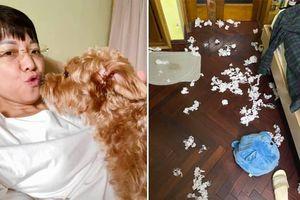 MC Thảo Vân than thở vì phải dọn 'chiến trường' của thú cưng, chồng cũ liền lên tiếng