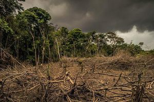 Biến đổi khí hậu: Hàng trăm công ty kêu gọi đảo ngược tình trạng mất đa dạng sinh học