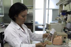 Nghiên cứu chế phẩm sản xuất bột giấy: Xác lập quy trình công nghệ mới