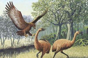 Từ vỏ trứng, tái hiện bộ gen loài đã tuyệt chủng
