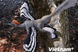 Vén màn bí mật về màu sắc lông vũ của khủng long