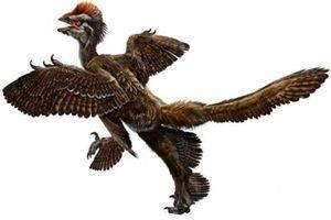 Hóa thạch loài chim cổ đại tại Sa mạc Gobi