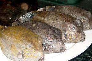 Ăn bao tử cá mặt thỏ khiến một người đàn ông nguy kịch