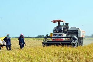 Cấp giấy chứng nhận đăng ký nhãn hiệu 'Lúa sinh thái Cà Mau'