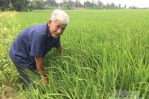 Lan tỏa sản xuất lúa sạch, chuẩn GAP ở đồng bằng sông Cửu Long