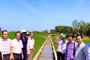 Tăng cường đào tạo, xây dựng thương hiệu gạo từ cánh đồng VnSAT