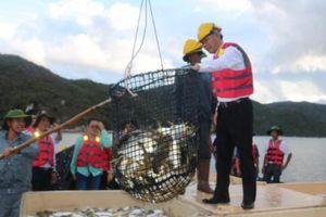 Thăm trang trại nuôi cá lồng biển quy mô công nghiệp đạt chuẩn VietGAP
