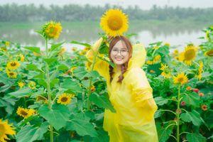 Đồi hoa hướng dương ở Ecopark khoe sắc đón Thu sang