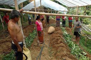 Tập huấn trồng rau nhằm cải thiện cuộc sống