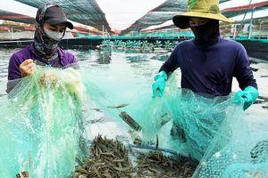 Nền tảng phát triển nông nghiệp bền vững