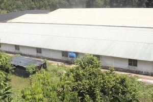 Quảng Nam: Người dân bị 'tra tấn' bởi mùi hôi của trang trại nuôi heo