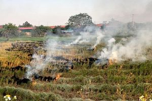 Hà Nội sẽ chấm dứt việc đốt rơm rạ, chất thải từ ngày 1-1-2021