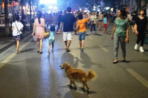 Hà Nội: Ăn mặc lịch sự, không nói tục, không dắt, thả vật nuôi ở phố đi bộ hồ Hoàn Kiếm