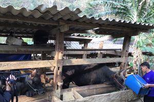 Bảo Lâm - Cao Bằng: Nâng cao hiệu quả đầu tư công để giảm nghèo