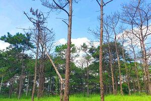 Ban Thường vụ Tỉnh ủy Đắk Nông kết luận vụ 'bức tử' rừng thông