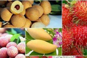 Tận dụng dư địa thị trường, tăng cường xuất khẩu trái cây sang Trung Quốc
