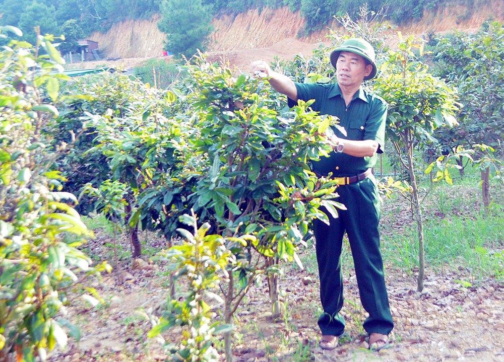 CCB làm giàu từ kinh tế vườn rừng