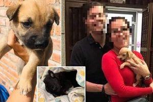 Sự thật kinh hoàng đằng sau cặp đôi nhận nuôi chó con bị bỏ rơi, mọi người tưởng nhân hậu